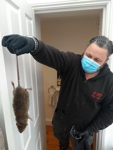 Pragas de ratos invadem casas e ruas de Londres durante confinamento