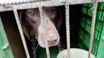 GNR resgatou 25 animais de canil ilegal em Castelo Branco