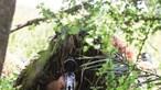 Sniper da GNR julgado por recusar treino de grupo