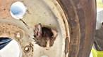 Gato preso durante dois dias em roda de carro no Texas