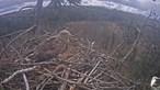 Imagens raras mostram ninho de águia branca nos bosques da Letónia. Veja em direto