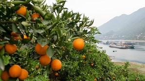Estudo revela que sumo de laranja aumenta risco de ter cancro da pele. Conheça os sinais de alerta