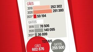 Dispara o número de animais adotados em Portugal