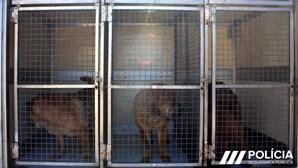PSP resgata três cães maltratados no Porto