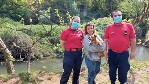 Bombeiros de Lordelo resgatam cão preso nas margens do rio