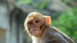 Bebé fica sem um dedo após ser mordida por macaco no Zoo de Gaia