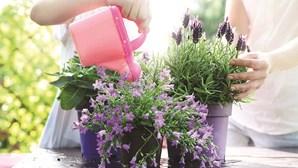Os truques para ter uma horta de sucesso na varanda de sua casa