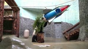 Panda celebra 60º. aniversário de Gagarin no espaço com foguetão especial