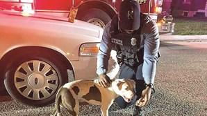 Cão herói recebe elogios e biscoitos após salvar dono