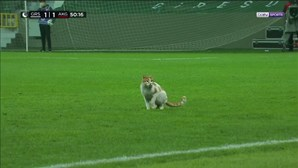 Gato invade campo de futebol na Turquia durante pausa no jogo