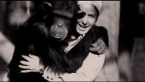 Mulher vive na selva durante seis anos para ensinar chimpazé criado como humano a ser selvagem