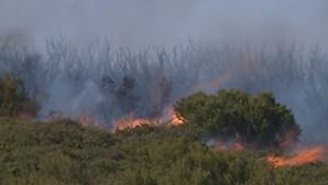 Dois detidos por queima que originou fogo florestal em Bragança