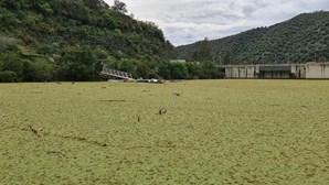 Rio Tejo verde com pesticidas provenientes de Espanha