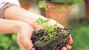 O que precisa de saber para criar uma horta no jardim ou varanda de sua casa