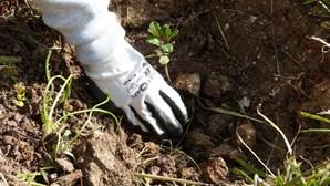 No Dia Mundial da Terra MultiOpticas planta 600 árvores em Lisboa
