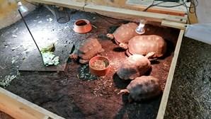Sala oculta em centro comercial escondia negócio ilegal de animais de espécies protegidas