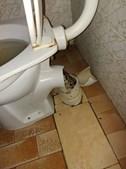 Serpente estava escondida na sanita quando atacou