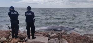 Baleia encalhada no Algarve