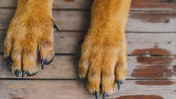 Cadáver de cão encontrado amarrado a uma árvore. Associação oferece recompensa para encontrar autor do crime
