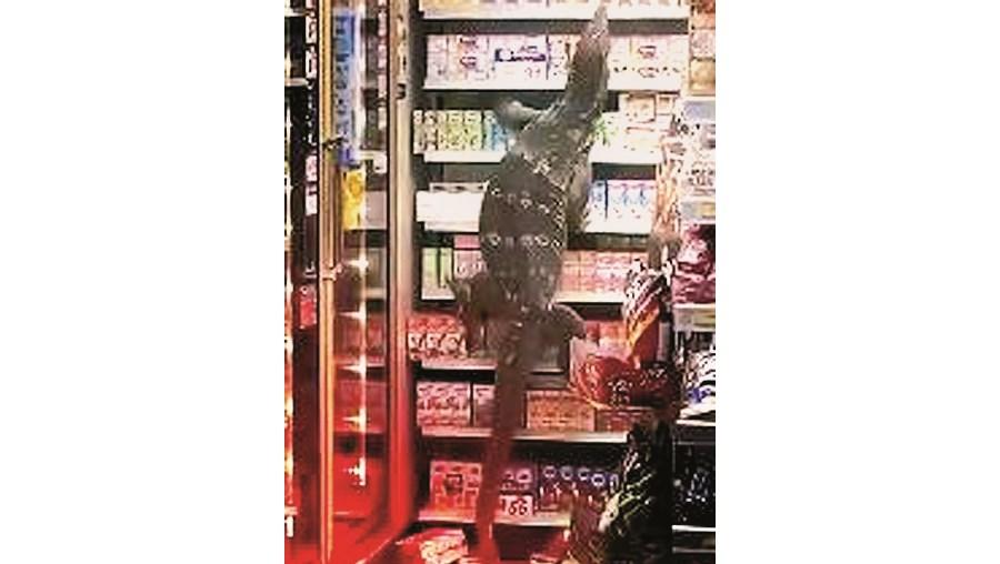 Lagarto gigante invade supermercado na Tailândia