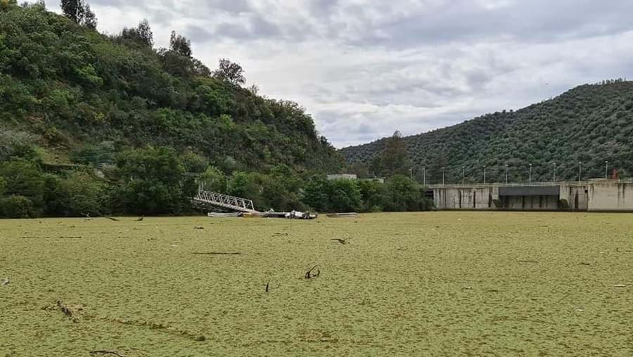 Algas resultantes da poluição fazem sombra, reduzindo a qualidade da água devido à falta de oxigénio