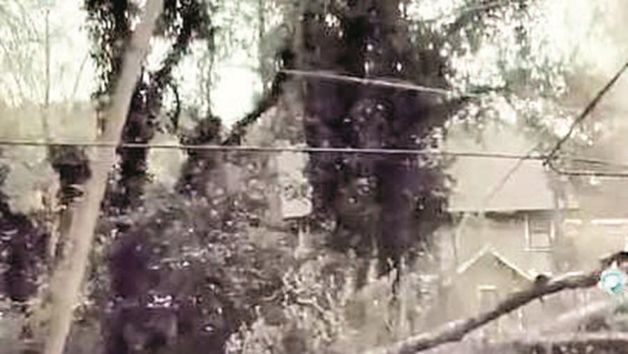 Carro escapa por um triz a queda de árvore nos EUA