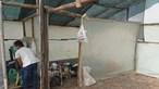 SOS Racismo pede combate por direitos humanos e contra estigmatização em Odemira