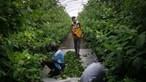 """""""Governo permite a escravização dos trabalhadores migrantes"""", denuncia sindicato"""