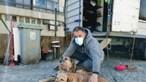 Homem vive em carrinha para não abandonar cães em Rio Tinto