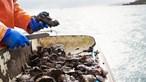 Termo de Identidade e Residência para detidos da rede de comércio de bivalves no Tejo