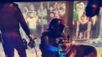 Pastor-alemão com pescoço cortado durante festejos dos adeptos do Sporting no Marquês de Pombal