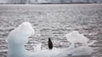 Icebergues: Enorme massa de gelo à solta na Antártida