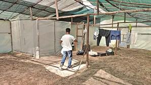 BE questiona Governo sobre medidas adotadas para garantir condições dignas em Odemira