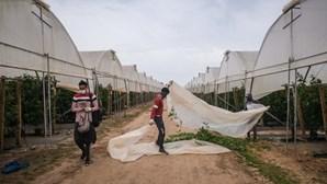 Ministério Público de Odemira com 12 inquéritos sobre auxílio a imigração e tráfico de pessoas