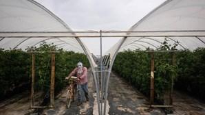 Odemira identifica mais de 300 trabalhadores a viverem sem condições