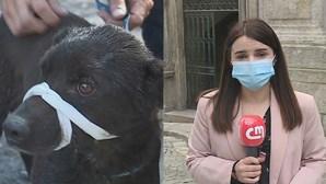 Ilibado homem que ateou fogo e que matou 73 cães em Santo Tirso