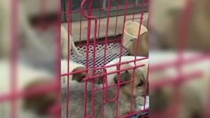 """Ativistas chineses resgatam mais de uma centena de cães e gatos de """"entregas surpresa"""""""