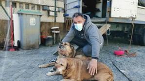 Homem vive em carrinha para não abandonar cães