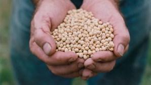 Universidade e empresa chinesas investigam novas variedades de soja no Brasil