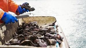 GNR em operação de desmantelamento de rede de comércio de bivalves com elevados níveis de toxicidade