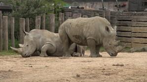 Animais do zoo de Paris preparam-se para desconfinar