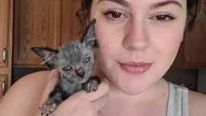 Mulher encontra gato e descobre que é espécime rara de gato-lobo