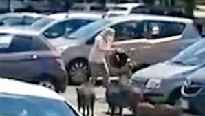 Javalis atrevidos 'assaltam' mulher em Itália