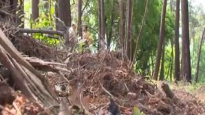 Mais de 14 mil locais identificados por falta de limpeza de terrenos