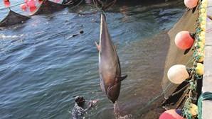 Atum algarvio ruma a Espanha