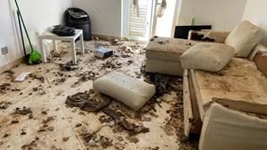 Vídeo mostra horror e chão coberto de dejetos em vivenda onde foram encontrados sete cães mortos
