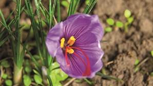 Flores belas e raras: As plantas mais caras do mundo