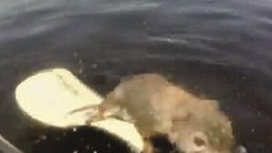 Esquilo em apuros salvo por por pescador