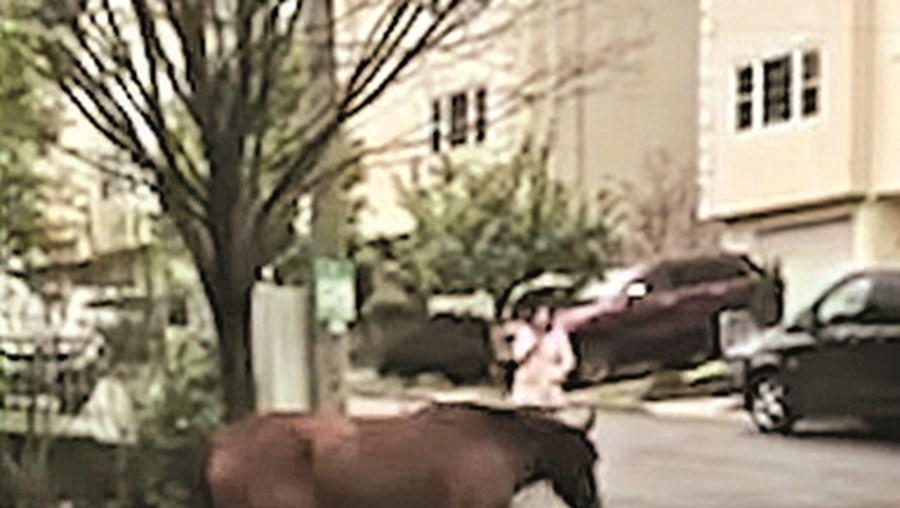 Cavalo 'apanhado' a passear pelas ruas de Nova Iorque
