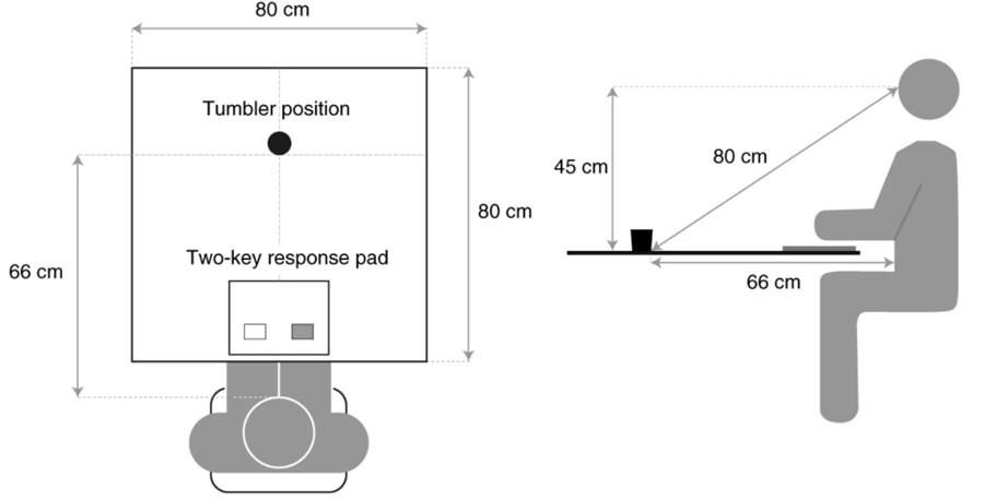 Esquema das tarefas visuais pedidas ao paciente